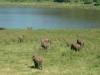 elefanti-a-Marsabit